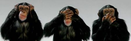 macacos.jpg