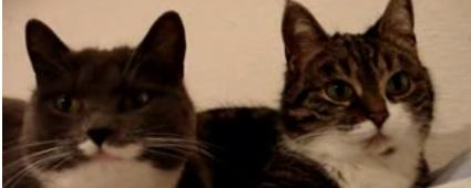 gatos-conversando.jpg