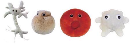 Células corporais
