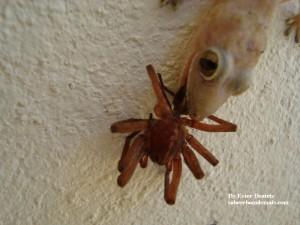A lagartixa que morreu pela boca, literalmente...