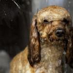 Máquina de lavar cachorros