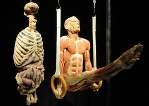 Corpos - A Exposição está no Brasil