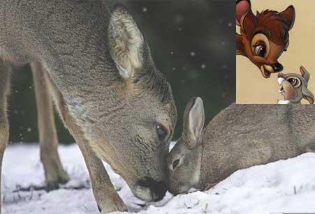 Bambi e Tambor