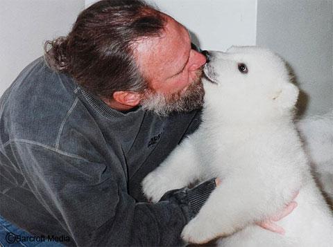 Urso polar filhote